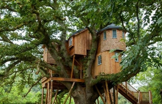 What Is It About Tree Houses